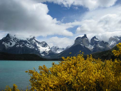 Mountains and flora in Torres del Paine